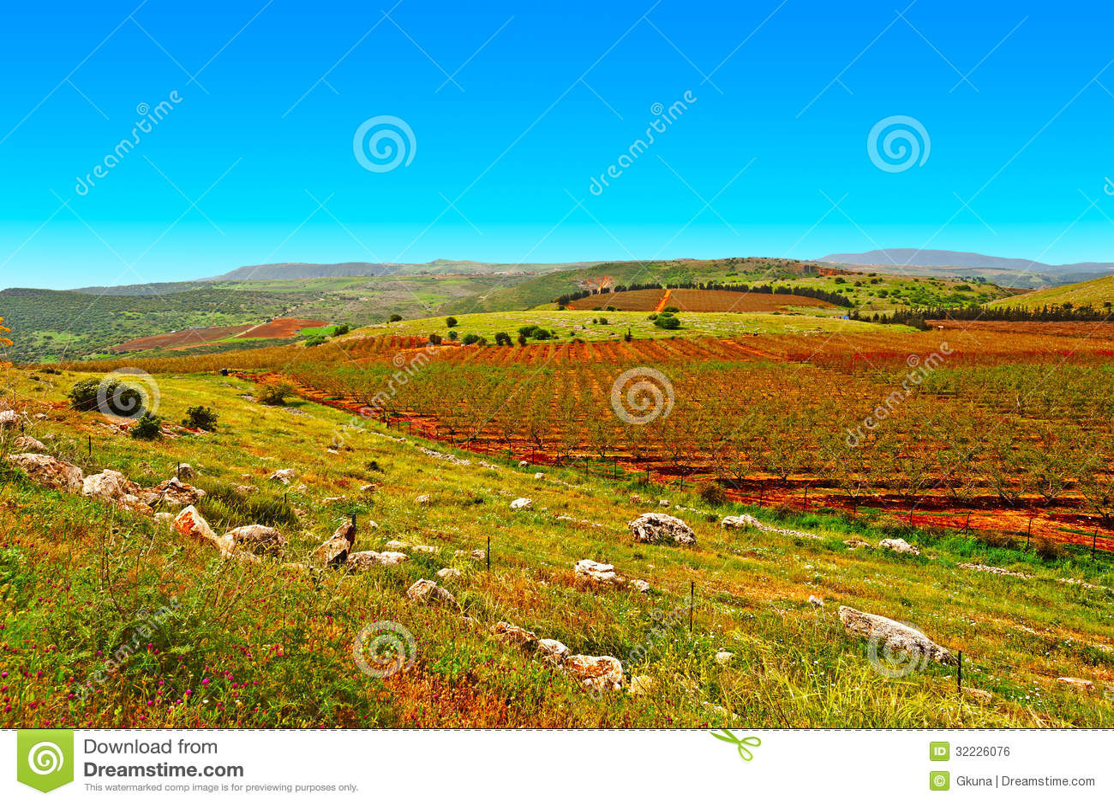 Download Golan Heights foto de stock. Imagem de azul, cultivar - 32226076