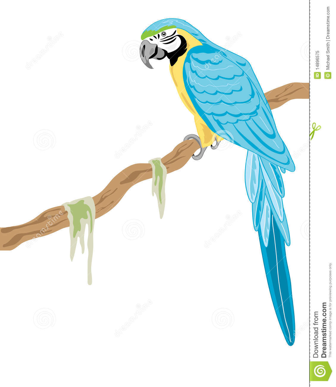 Blue Macaw Drawing Gold and blue macaw st...