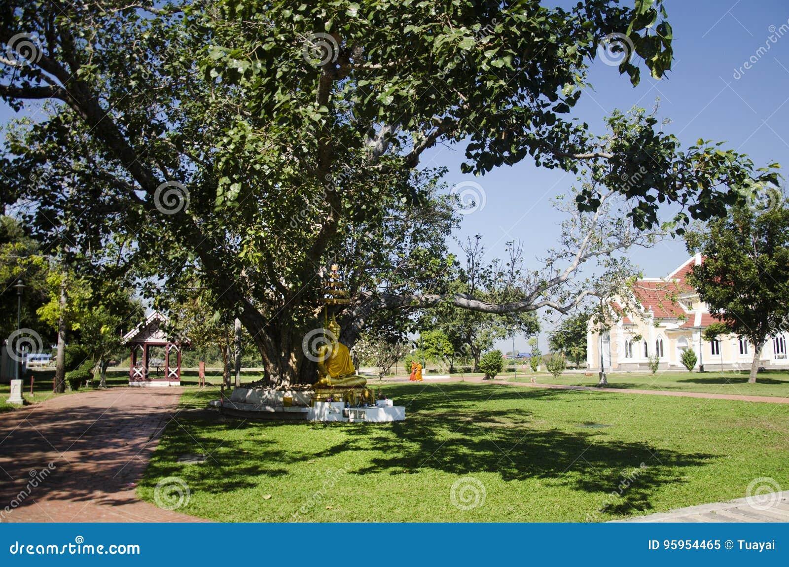 Gold Buddha Statue Im Garten An Im Freien Redaktionelles Bild Bild