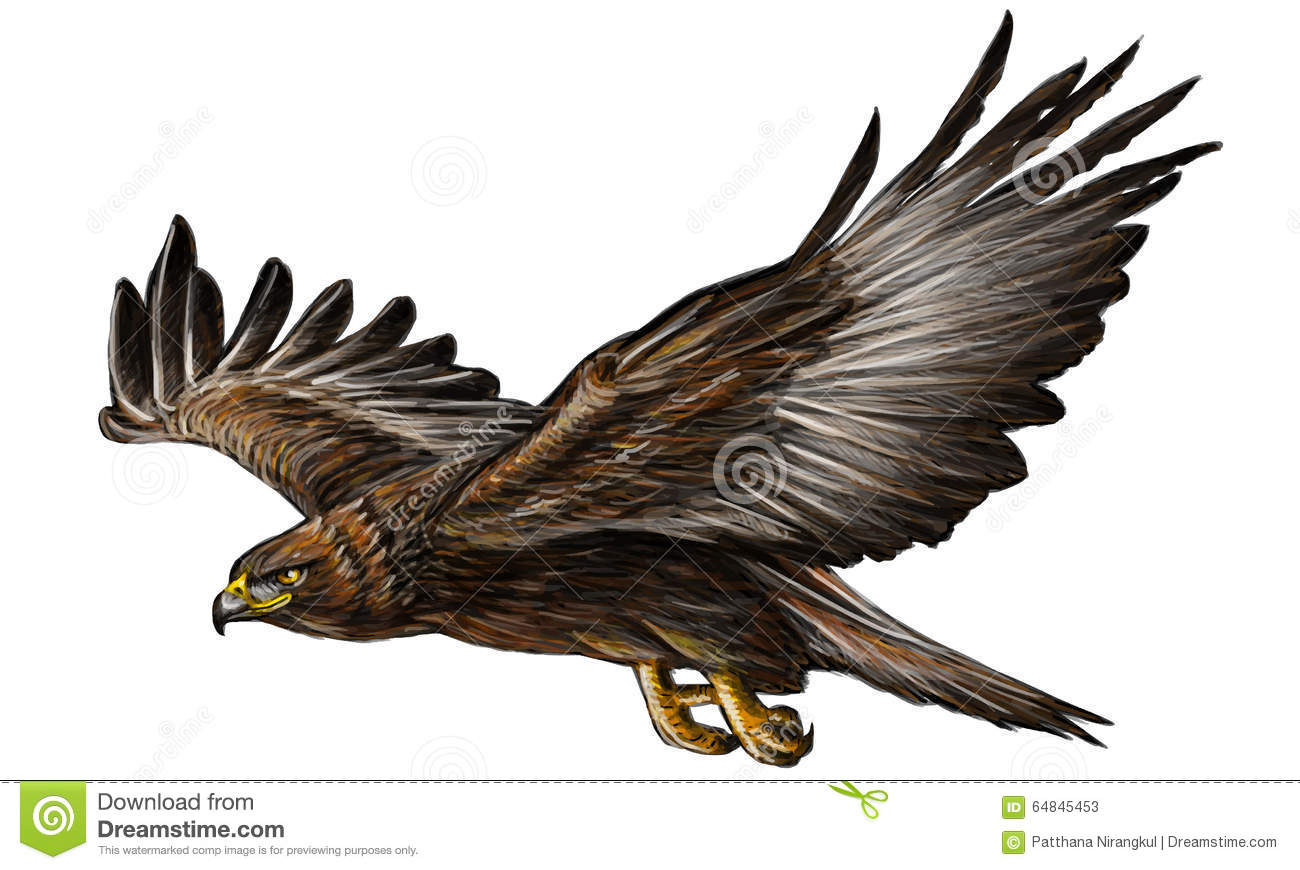 Gold eagle fly color vector