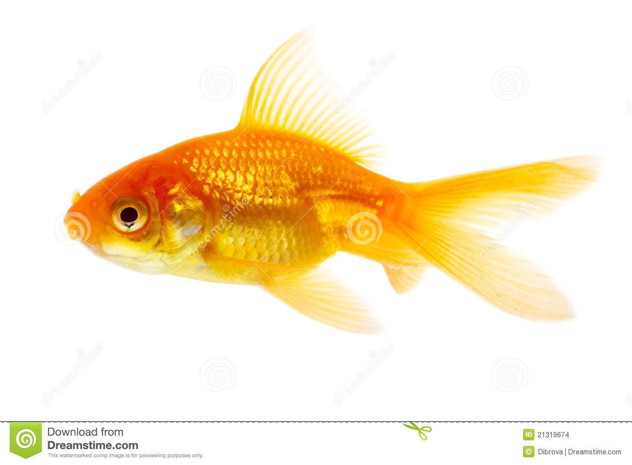 Gold fish stock images image 21319674 for Image of fish
