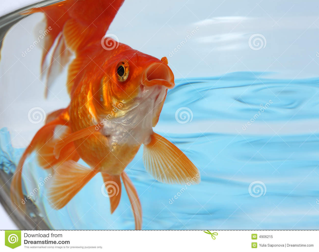 Gold freshwater fish for Fish for gold