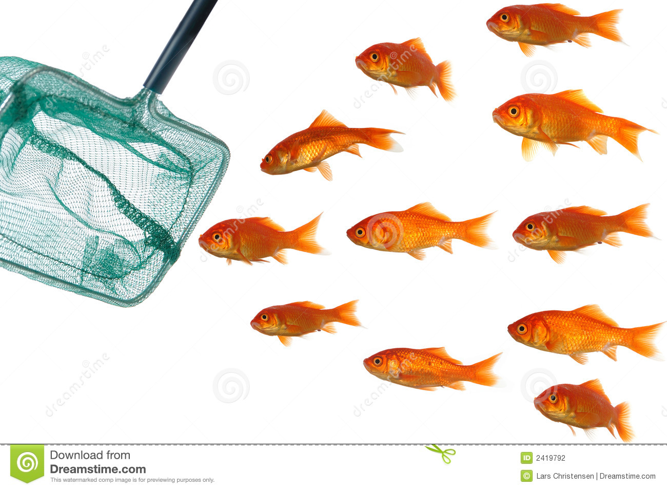 Gold fish and net