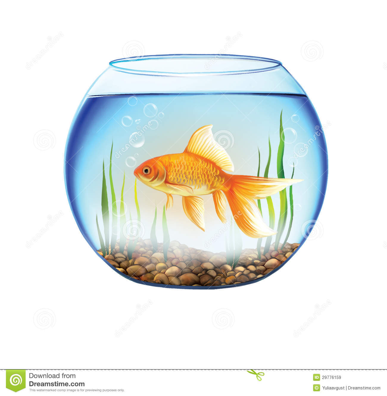 Gold fish in a round aquarium fish bowl stock for Fish in a bowl