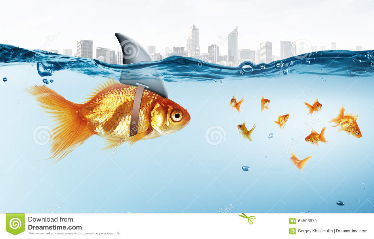 Gold fish with shark flip stock photo image 64508679 for Dreaming of fish