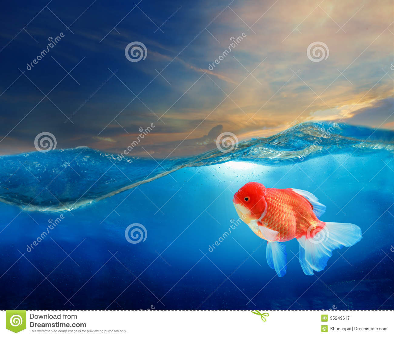 Gold fish under blue water with beautiful dramatic sky for Dream about fish out of water