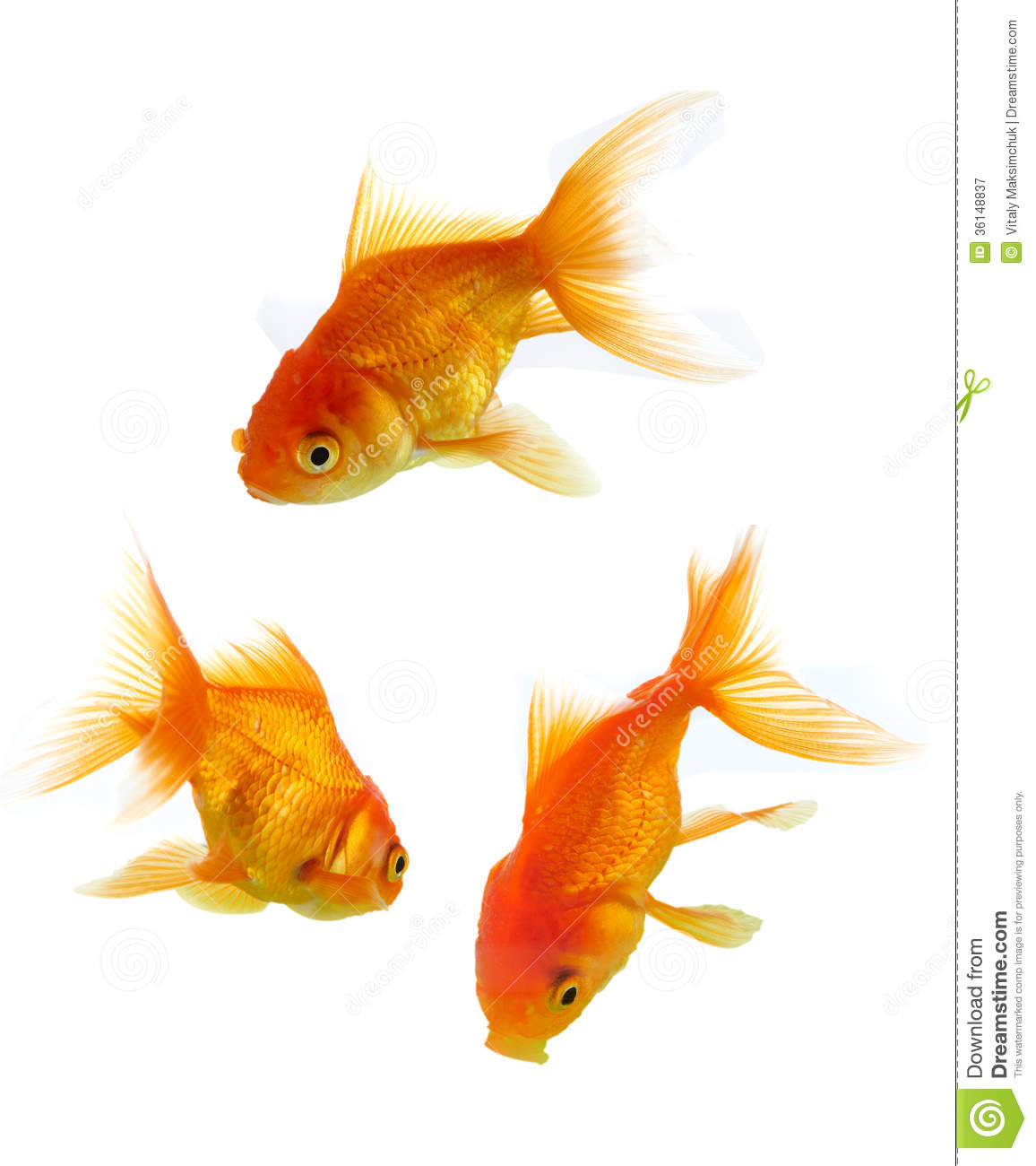 Gold Fishes Photos Gold fishes a