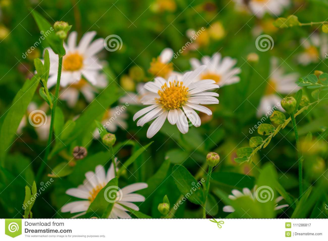 White flowers in the garden stock image image of beautiful love download white flowers in the garden stock image image of beautiful love 111286817 izmirmasajfo
