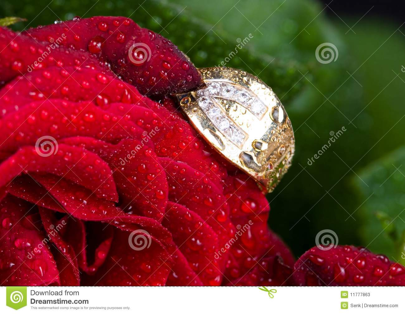 ... and red rose. Close up and Macro shot of a gold ring in a red rose
