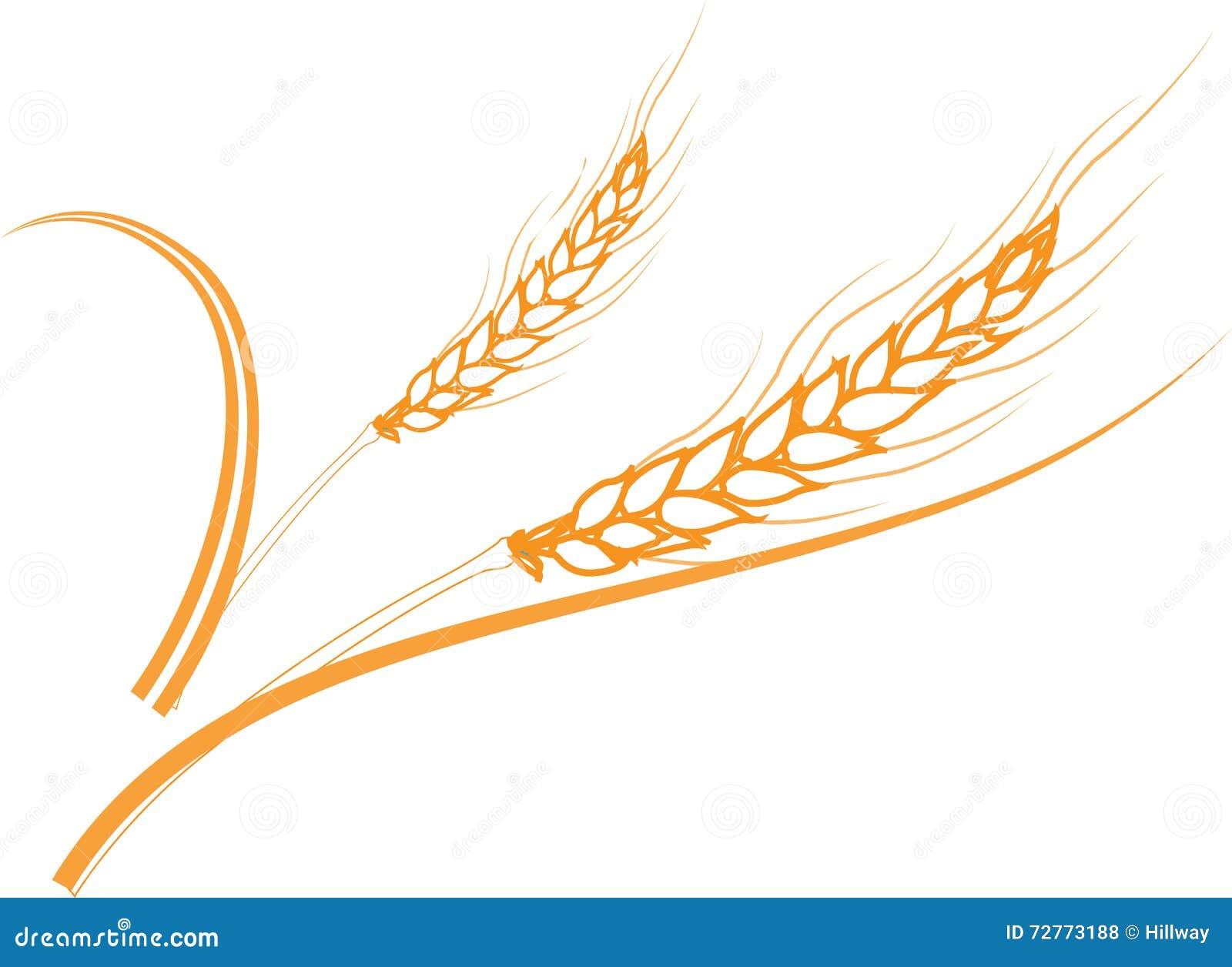 Gold Ripe Wheat Ears Frame Border Or Corner Element Royalty Free Stock Photos