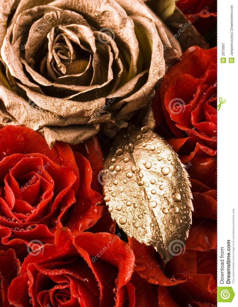Gold Rose & Red Roses Royalty Free Stock Photography - Image: 2870687