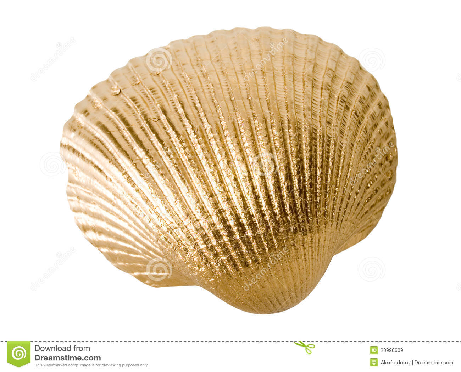 Gold shell.