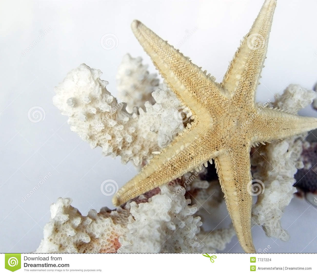 A gold starfish over a white coral branch