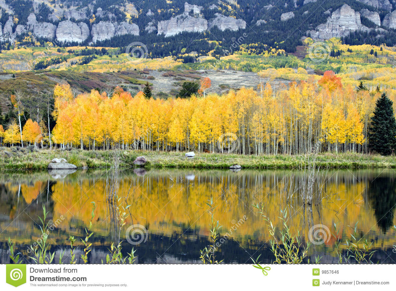 Golden Aspens and reflections