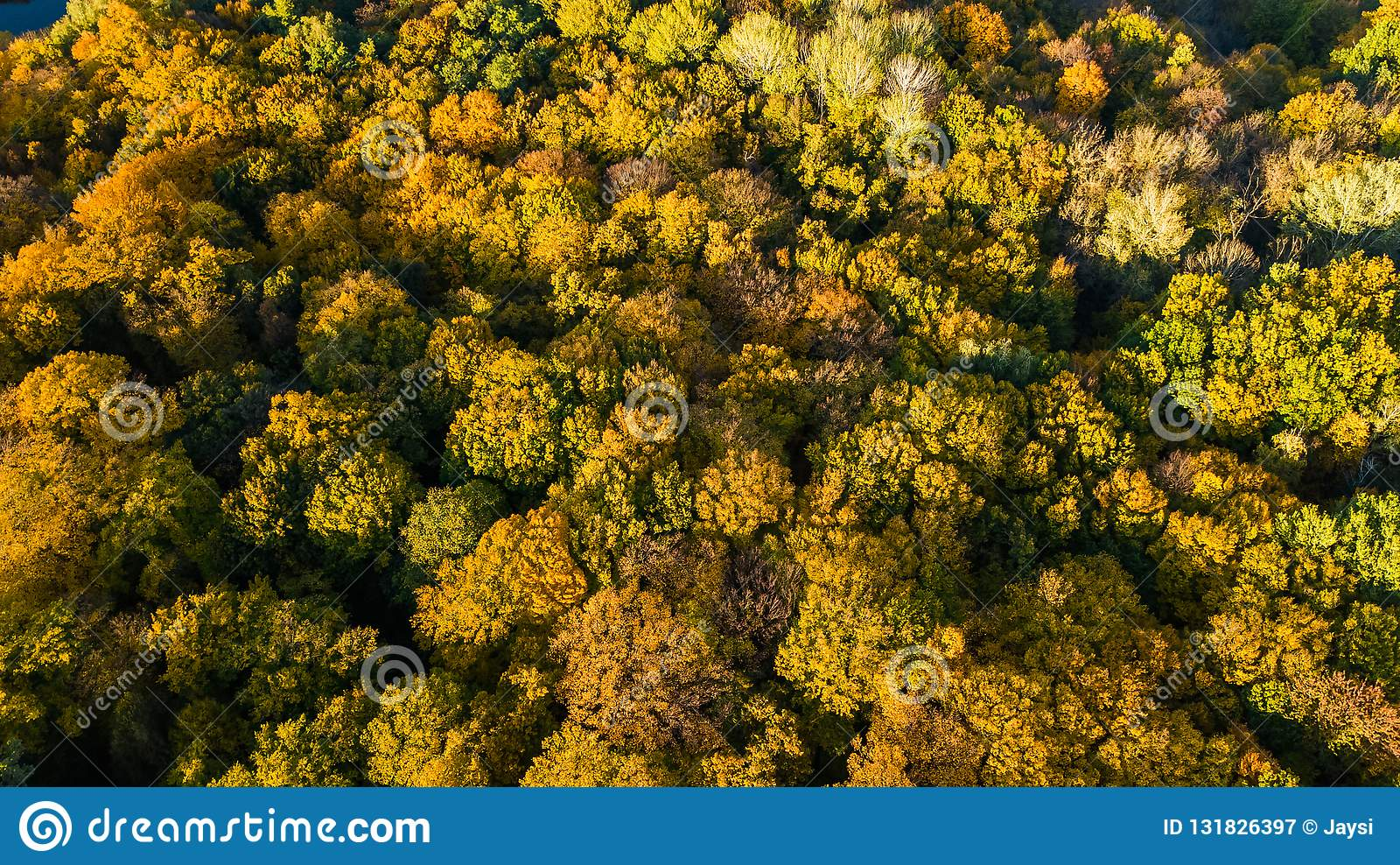 Golden autumn background, aerial drone view of beautiful forest landscape with yellow trees from above