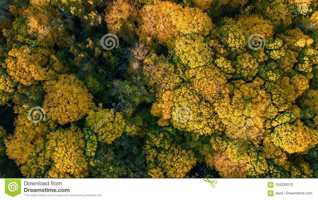 Golden autumn background, aerial view of forest landscape with trees from above
