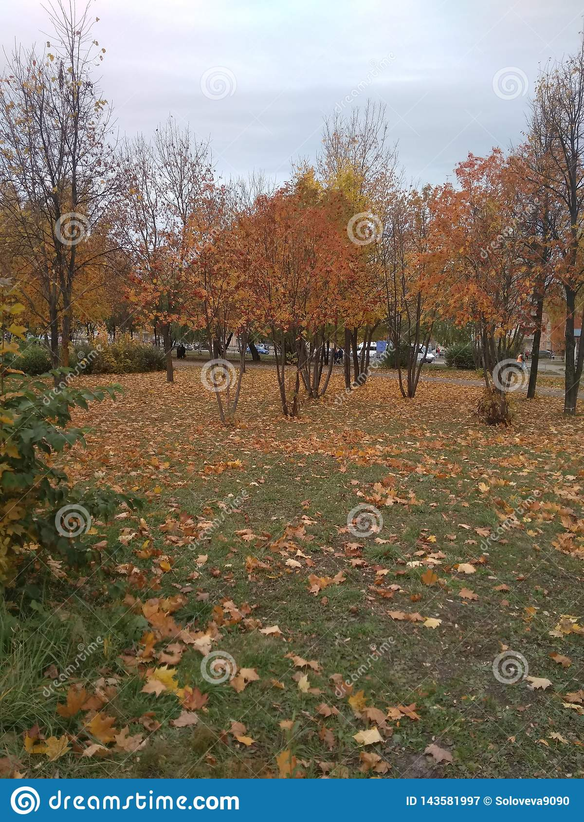 Golden autumn, yellow trees and fallen leaves