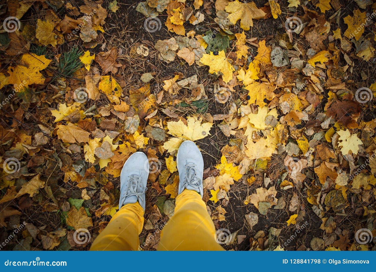 Golden autumn, yellow trees in sunlight, leaves underfoot.