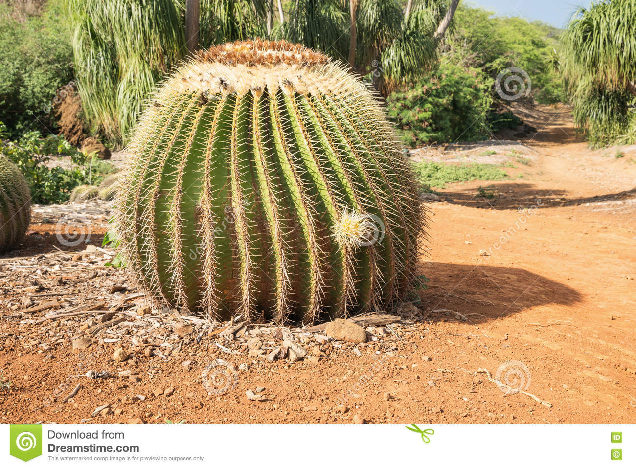 Cactus in botanical garden royalty free stock photography for Botanical garden timing