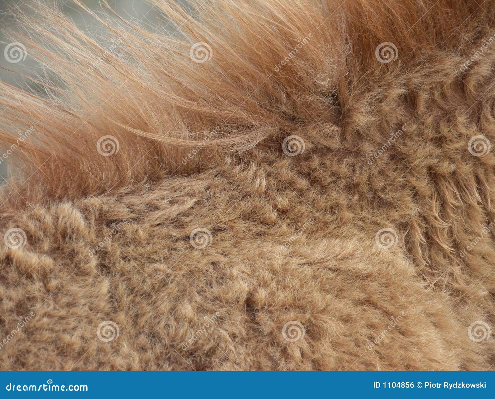 Golden brown animal mane
