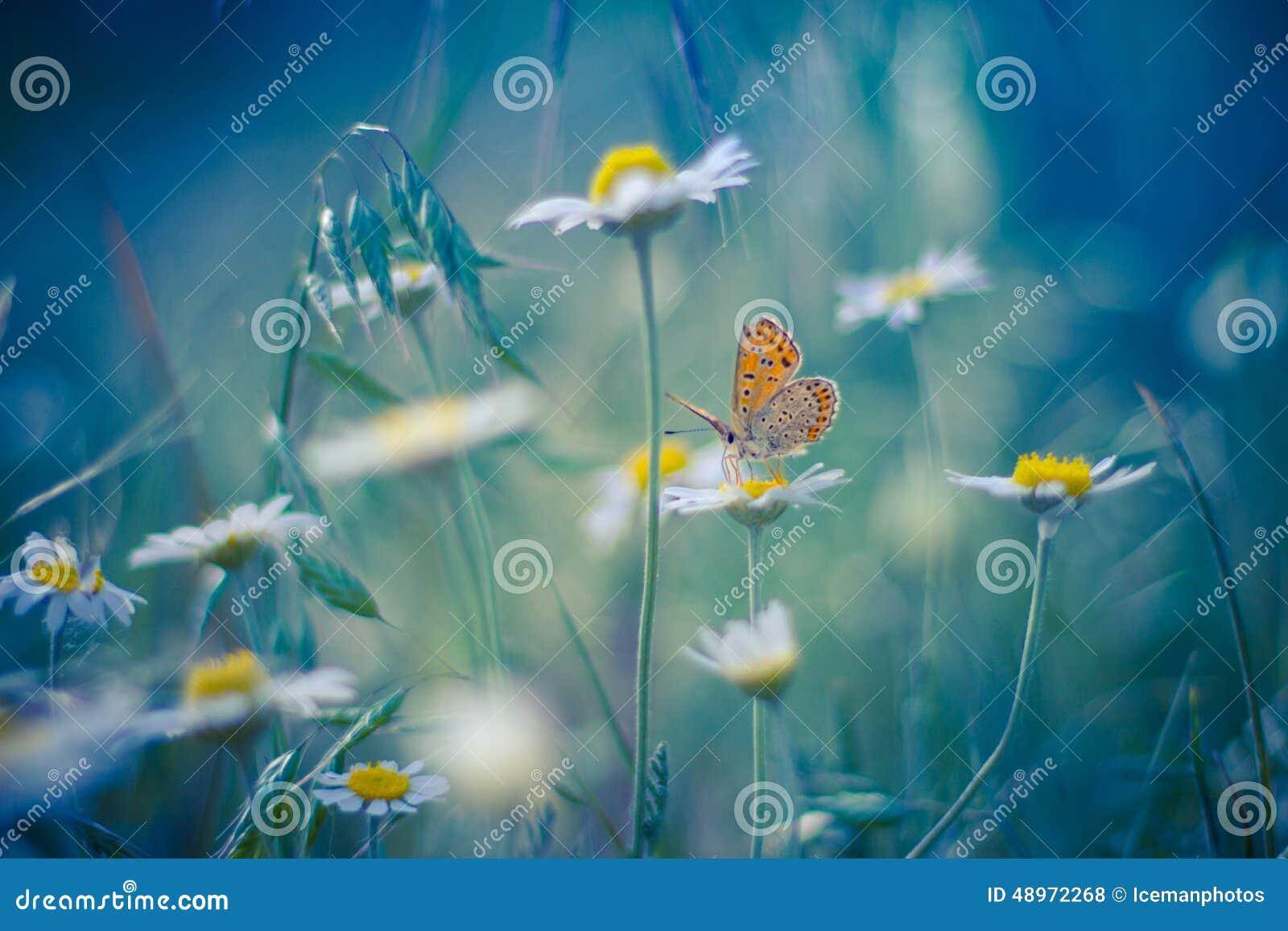 Golden Butterfly on daisy flowers