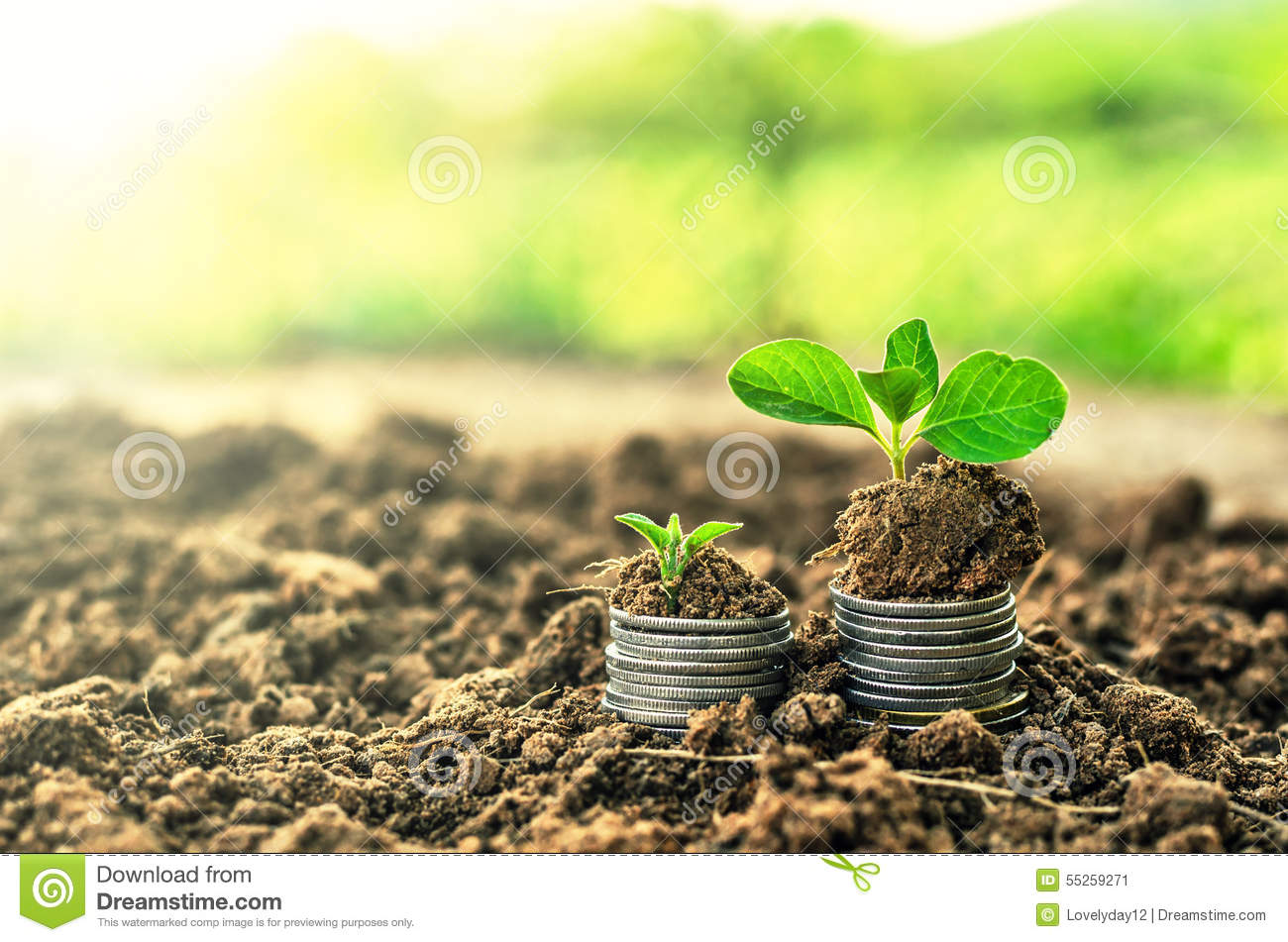 Golden coins in soil with young plant money growth for Soil young s modulus