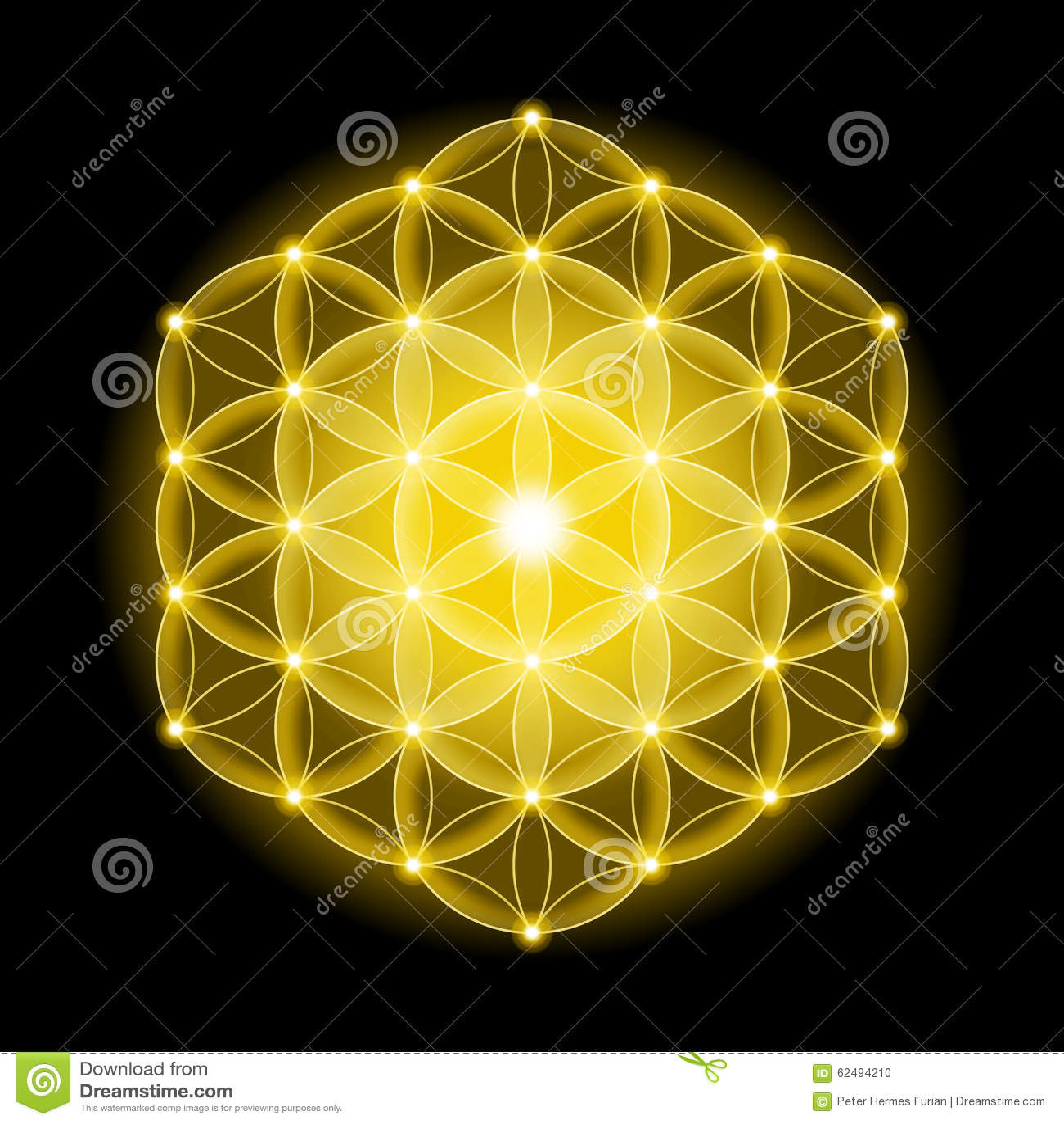 Golden Cosmic Flower Of Life With Stars On Black