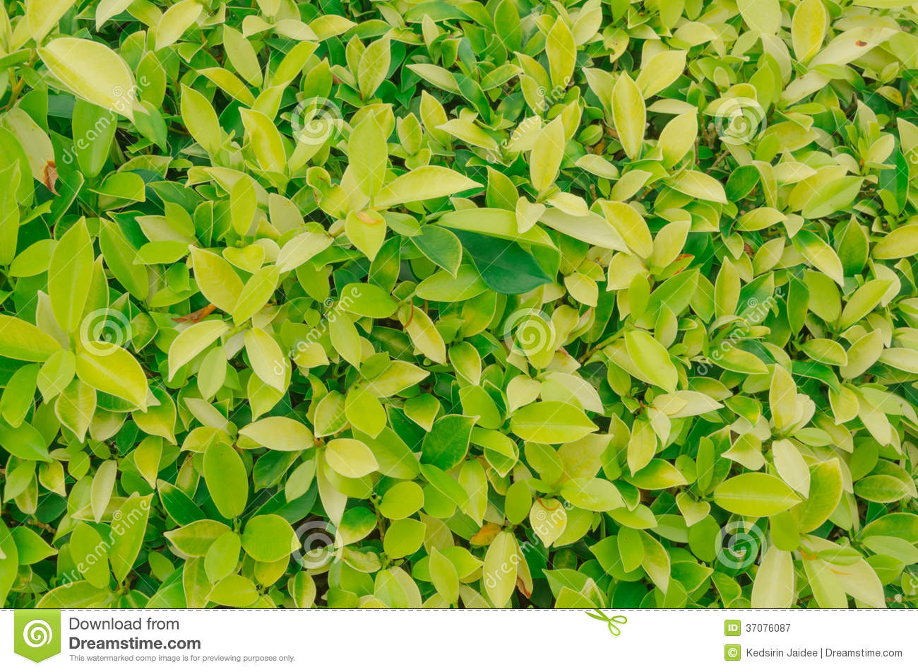Yellow Green Background Texture