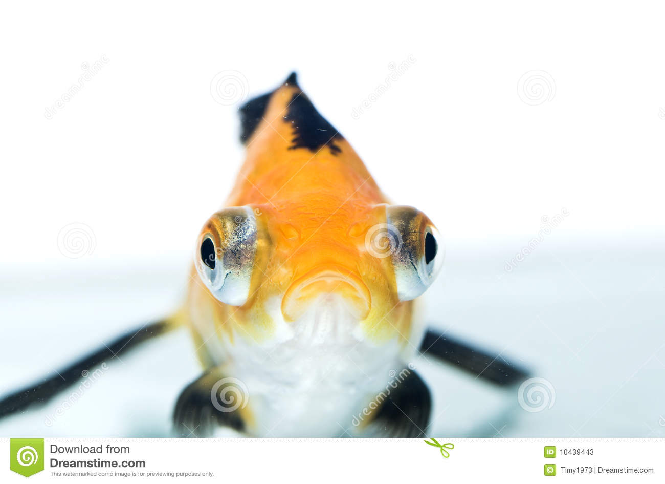 Golden Fish Stock Photos - Image: 10439443