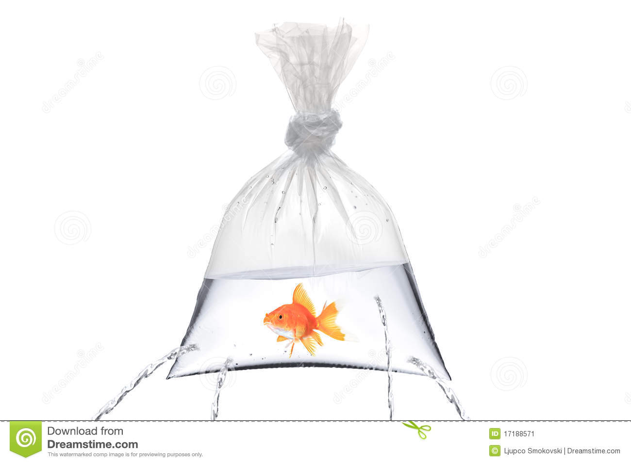 Golden fish in a bag with holes stock image image 17188571 for Fish in a bag
