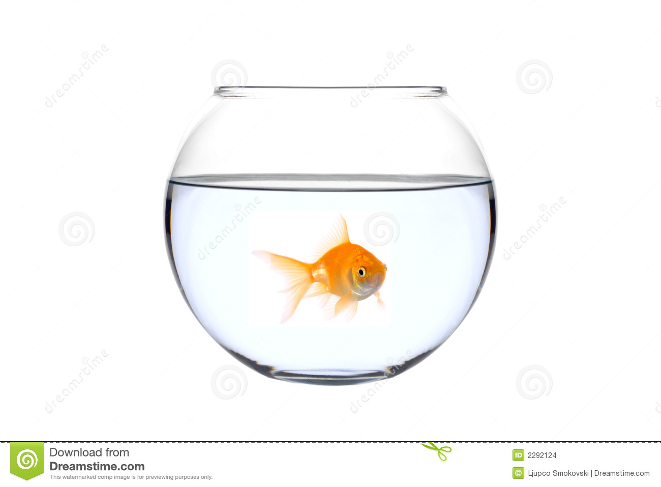 golden-fish-bowl-2292124.jpg