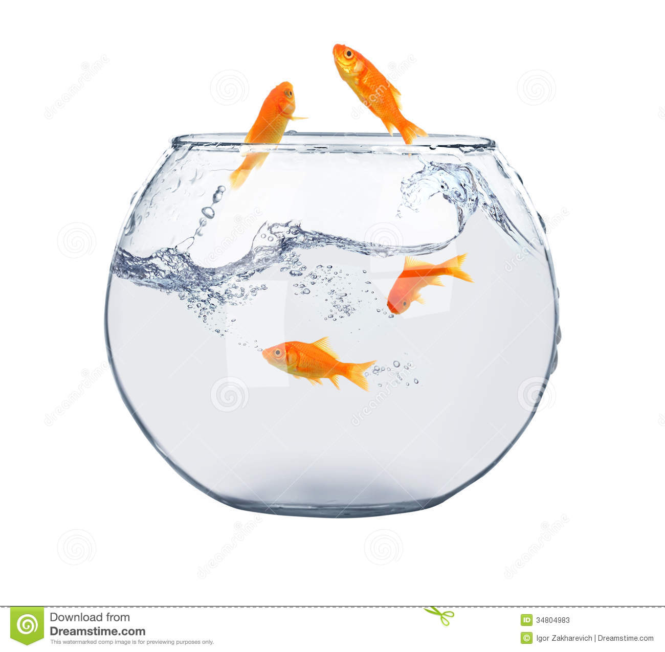 Golden fish in fish bowl stock image image of clear for Fish bowl fish