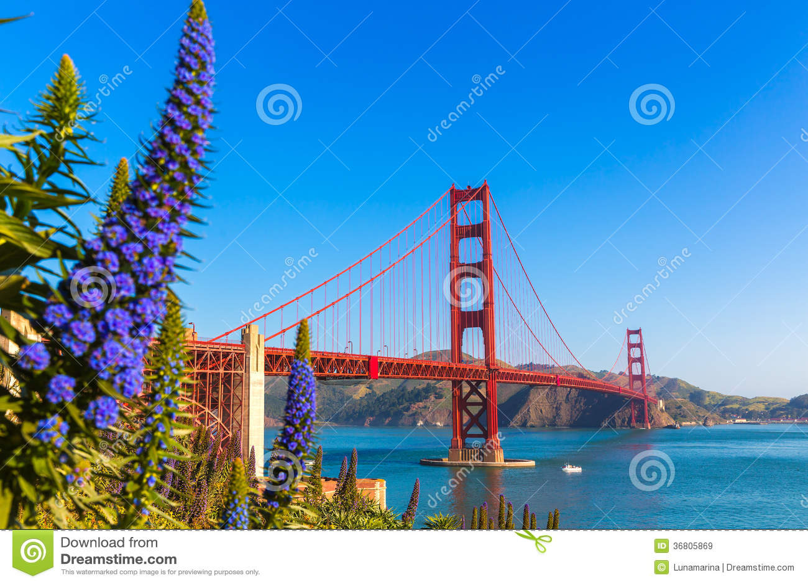 Golden Gate Bridge San Fransisco purpura kwitnie Kalifornia