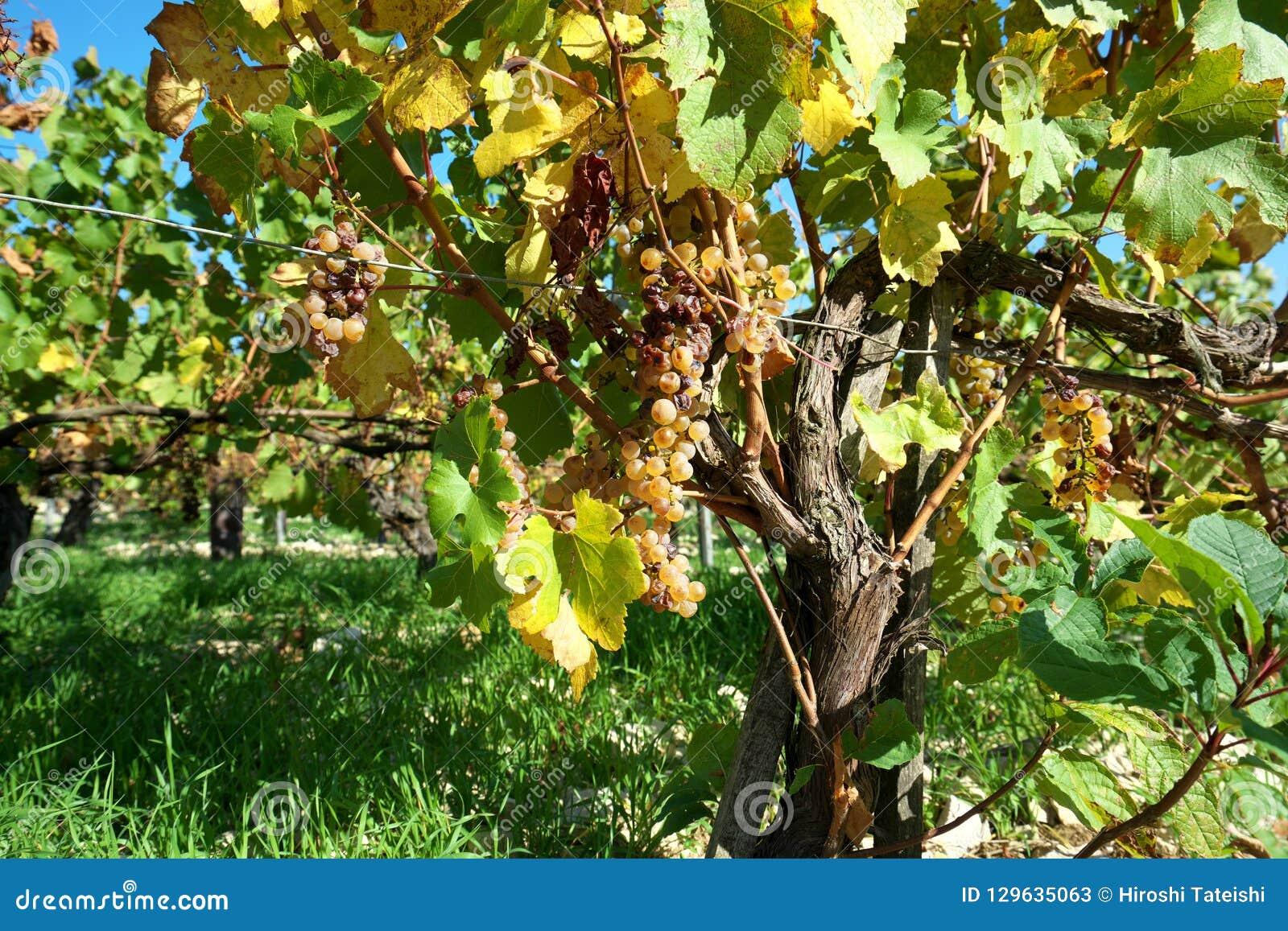 Golden Gate van Bourgondië, dorp van Chablis in Bourgogne-gebied, beroemd voor witte wijn