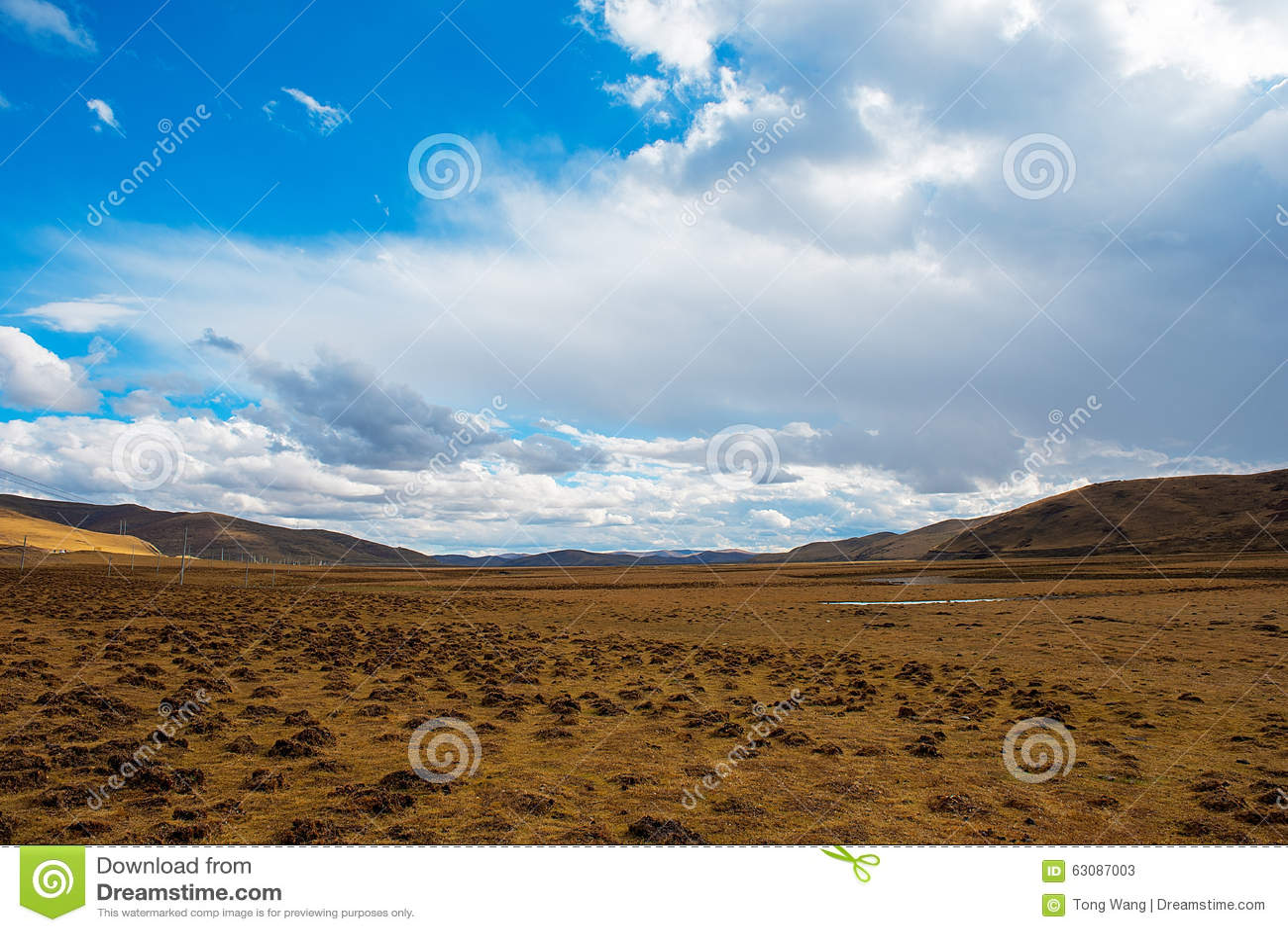 Golden grassland.