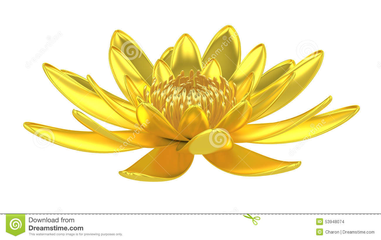 Golden Lotus Flower Water Lily Stock Photo Image Of Flower Floral