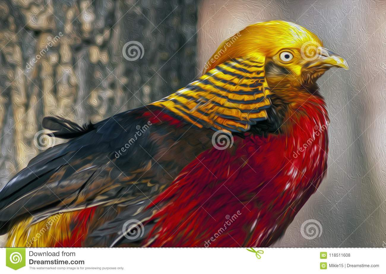 The Golden Pheasant