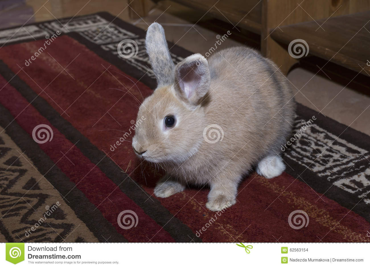 golden rabbit domesticated pet looking ahead suitable for children stock photo image 62563154. Black Bedroom Furniture Sets. Home Design Ideas