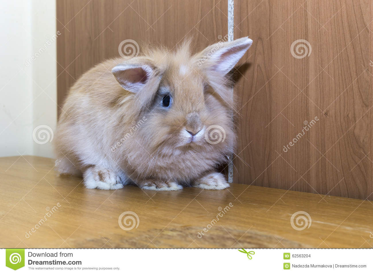 golden rabbit domesticated pet looking ahead suitable for children stock photo image 62563204. Black Bedroom Furniture Sets. Home Design Ideas