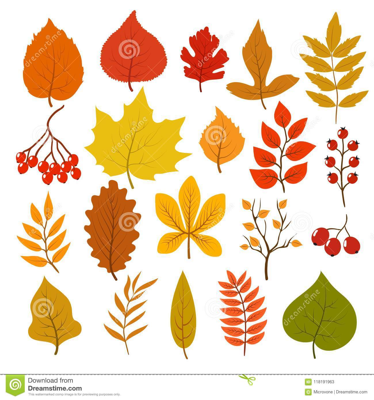 Golden And Red Autumn Leaves Brunches And Berries Fall Leaf Vector Cartoon Collection Isolated On White Background Stock Vector Illustration Of Floral Foliage 118191963
