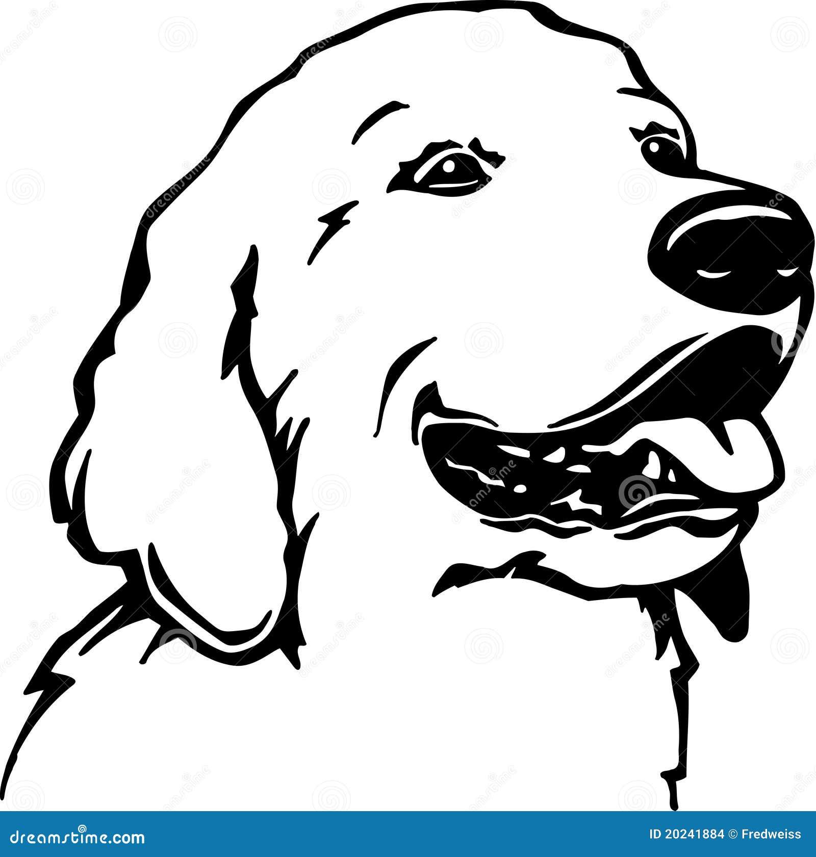 Line Drawing Golden Retriever : Golden retriever stock images image