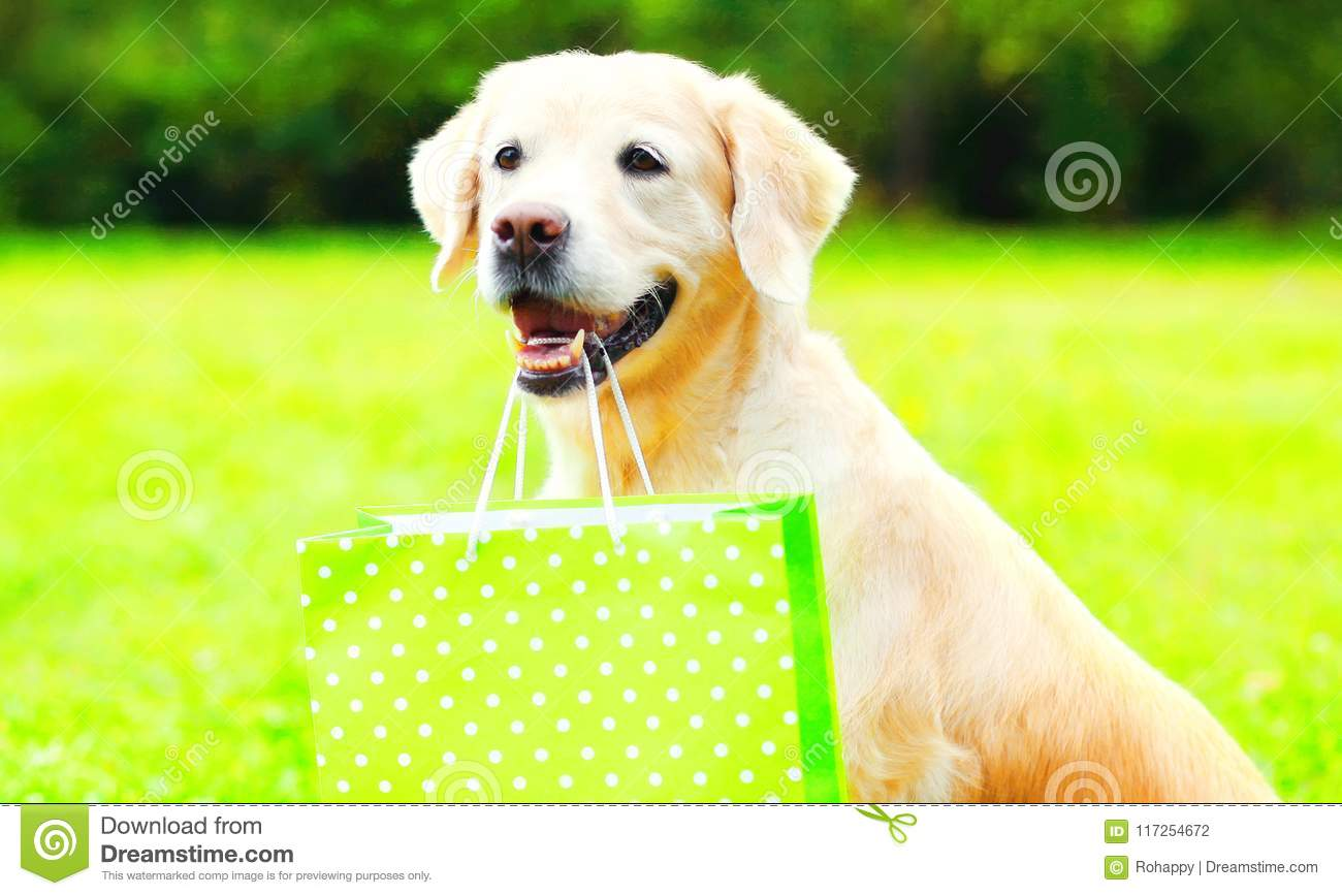 Golden Retriever dog is holding a green shopping bag in the teeth