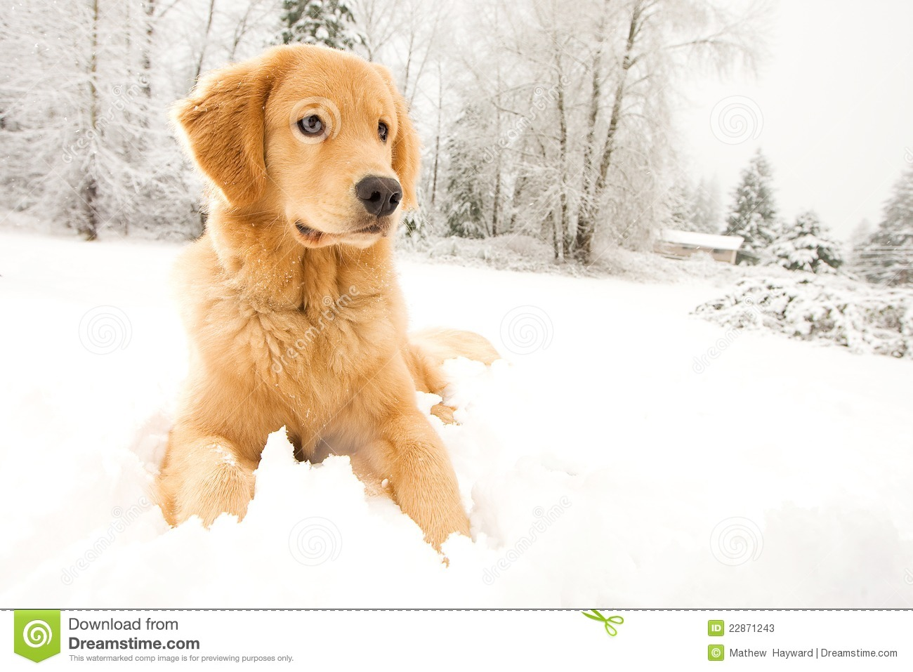 Dog Winter Names