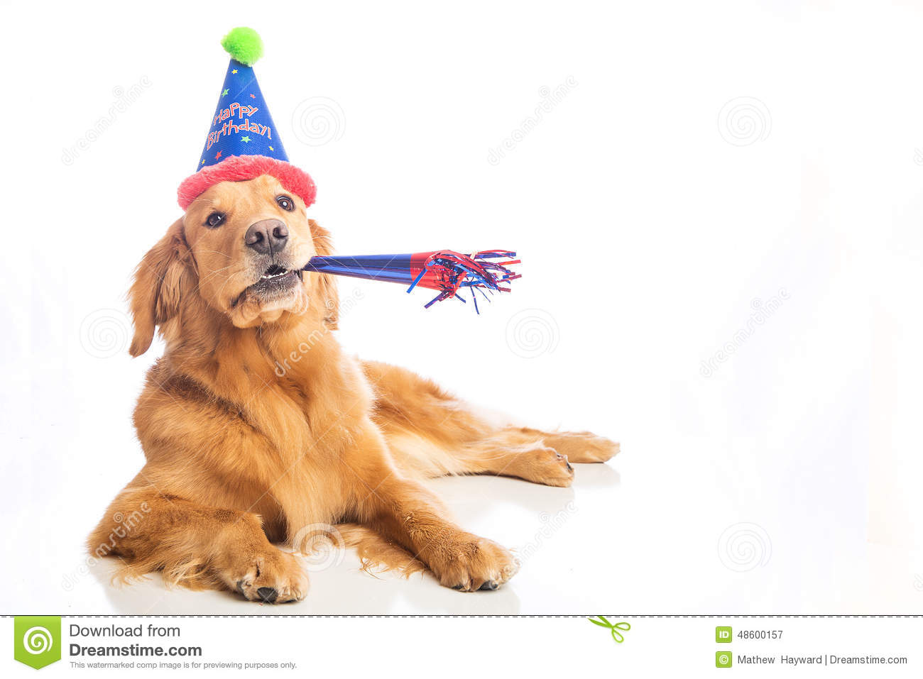 Golden Retriever Dog Stock Image Image Of Adorable Soft 48600157
