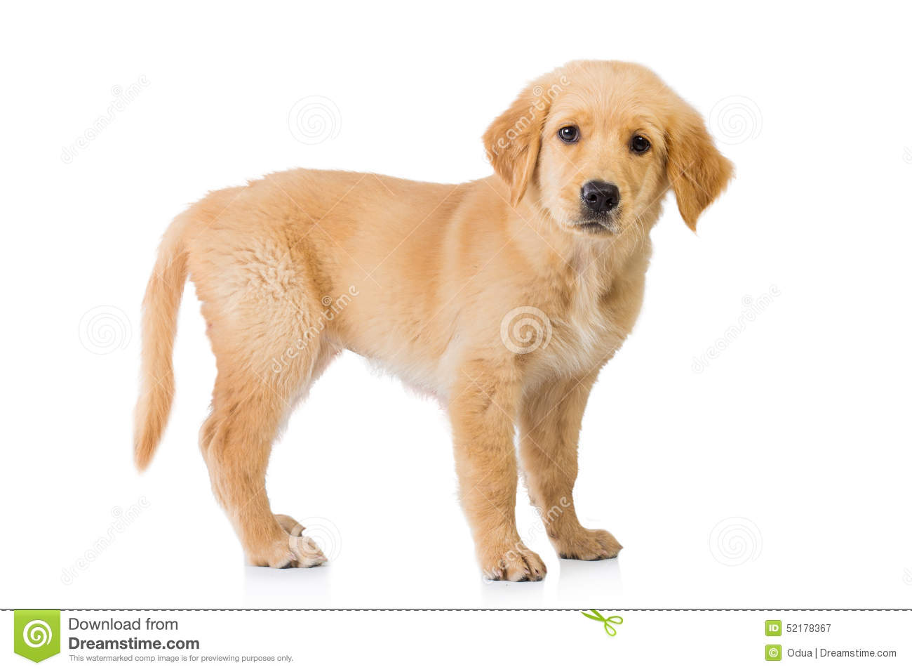 Dog Standing Over Puppy