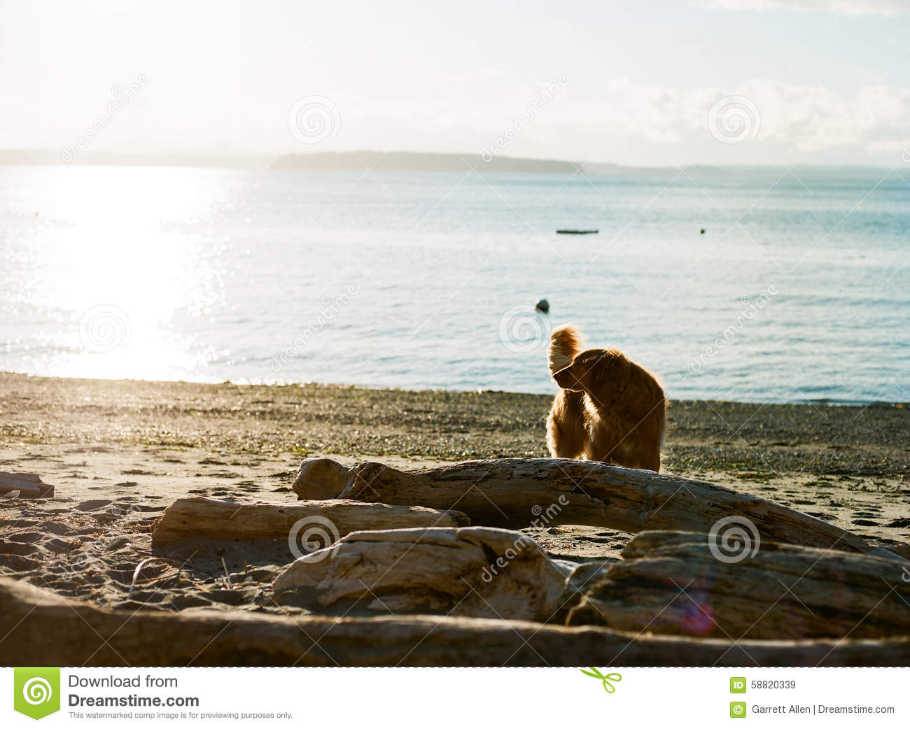 Best Off Leash Dog Beaches in Seattle, WA - Last Updated ...