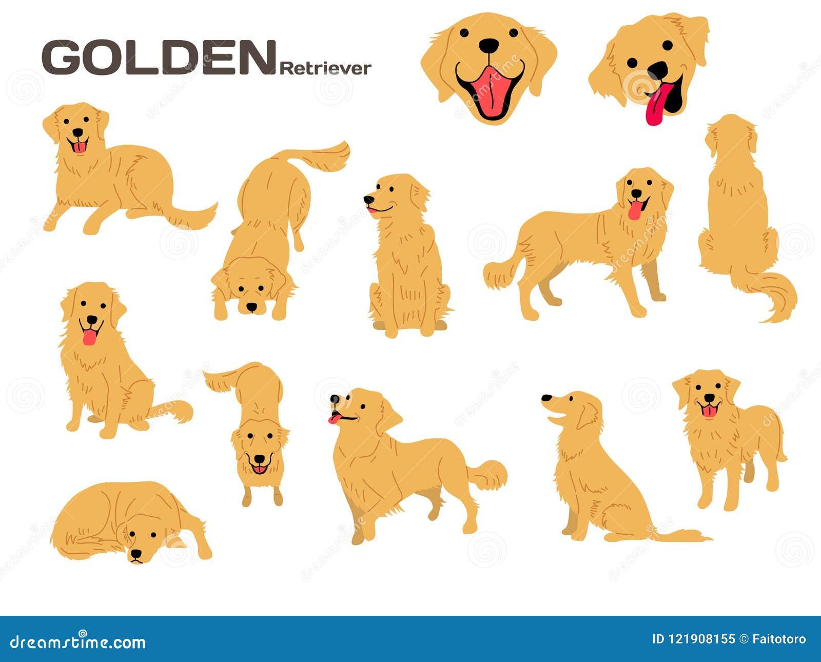 Golden Retriever Stock Illustrations 2 329 Golden Retriever Stock Illustrations Vectors Clipart Dreamstime