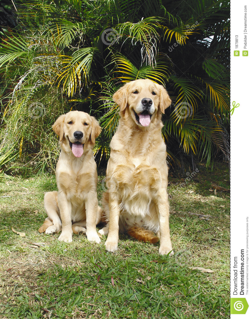 Mother dog Stock Photos, Royalty Free Mother dog Images ... |Dog Mom And Daughter