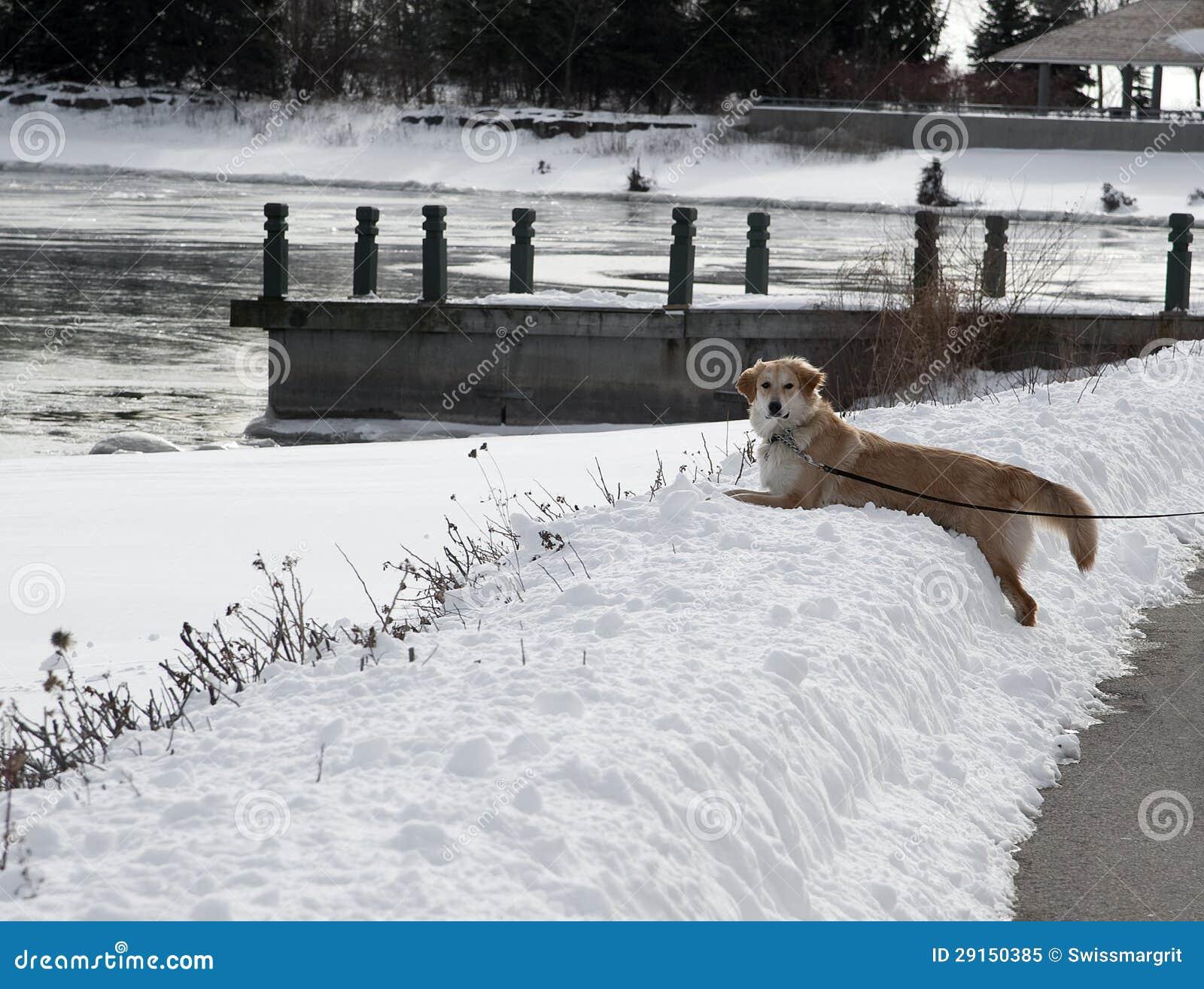 A Golden Snowbank