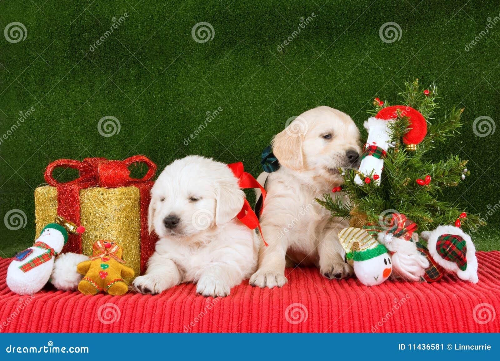 Golden Retriever Puppies With Xmas Tree Stock Image Image Of